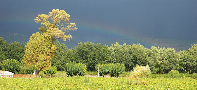 vignoble-apies-cote-provence-1