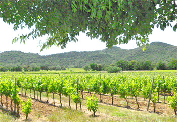 vignoble-apies-cote-provence-2